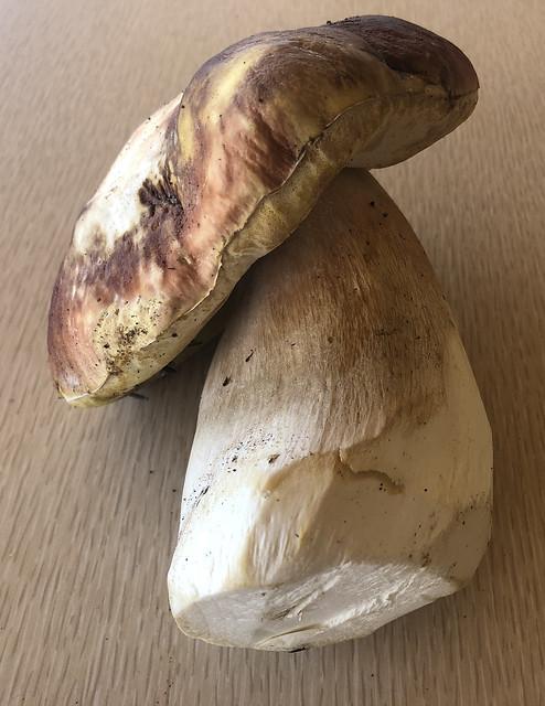 Mushroom Reference #5