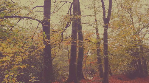 Douceur et brume de l'automne, mist and sweetness. 🍁🍂🍂🍂🍂🍁🍁🍁