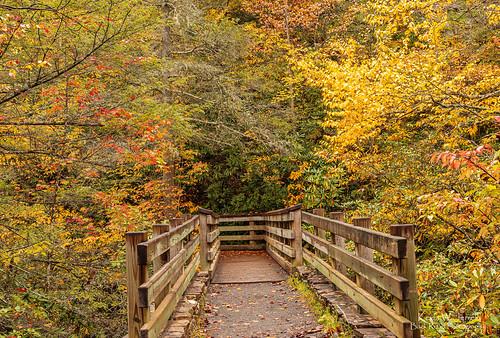 bridge autumn autumnbeauty autumncolors fall fallcolor backroadphotography scottcounty dungannon virginia sigmalens