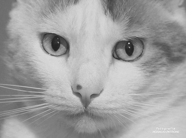 -HOMENAJE al ultimo adios de mi querido y amado gato BUCHY . 11 años . dead 30 / 10 / 2020 .11 AM...the last goodbye of my dear and beloved cat BUCHY. Forever in my heart