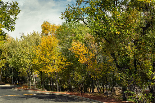 prescott_fall_color_20201102_102