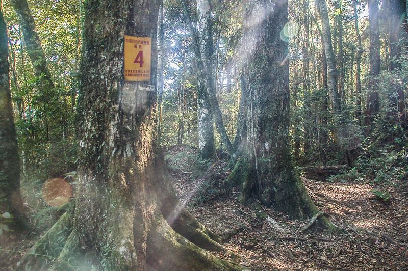 哈堪尼山4號救援樁鹿湖山岔路 (1)
