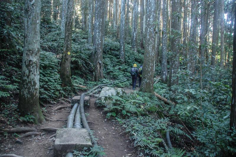 加里山登山路徑