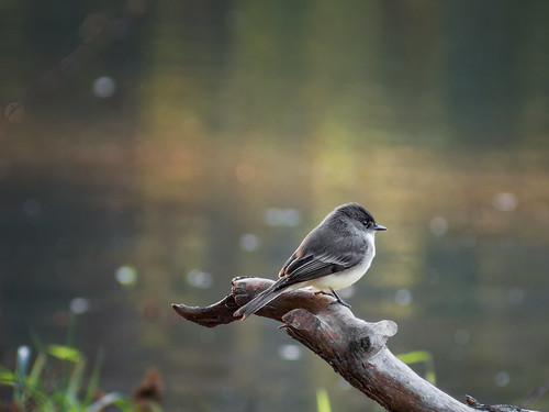 Bird perched on branch in pond