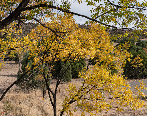 prescott_fall_color_20201102_116