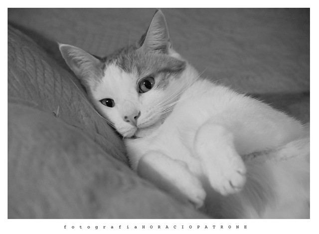 -HOMENAJE al ultimo adios de mi querido y amado gato BUCHY . 11 años . dead 30 / 10 / 2020 .11 AM..the last goodbye of my dear and beloved cat BUCHY. Forever in my heart