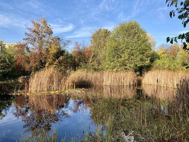 Teich im Biotop Am Stausee