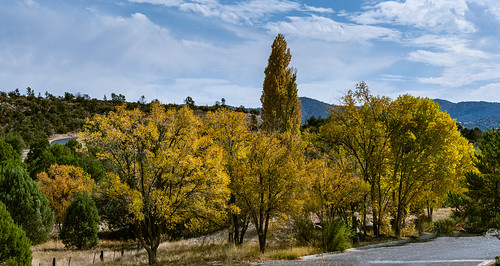 prescott_fall_color_20201102_114
