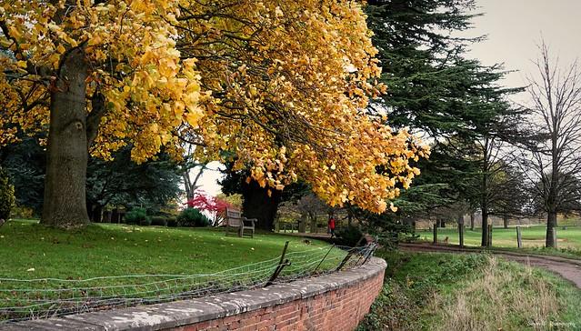 Arc of Autumn. Nov 2020