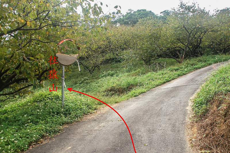 猿山登山步道果園岔路 (1)