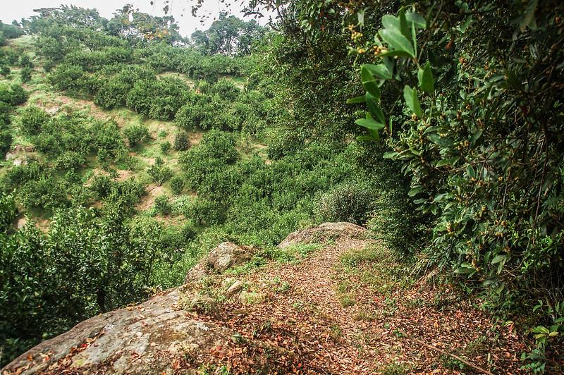 猿山、獅頭山山徑果園 (3)