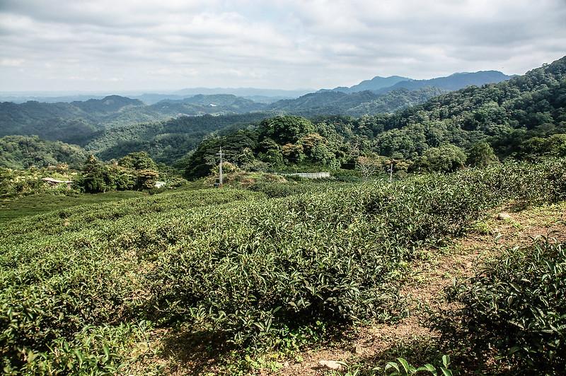 猿山、獅頭山山徑果園 (2)