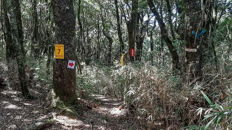 哈堪尼山往加里山路徑