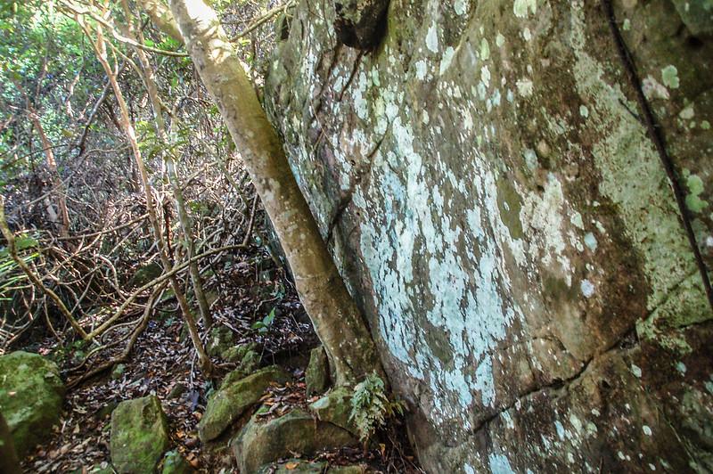 蕃婆石山危險岩稜取左腰繞 (3)