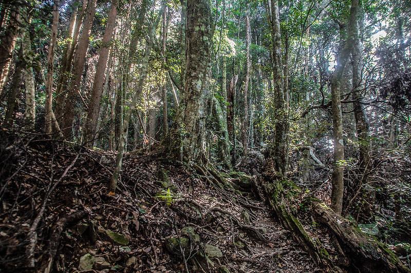 哈堪尼山雜木林林相