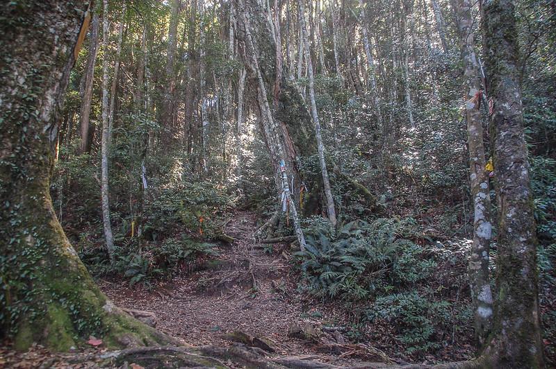 哈堪尼山4號救援樁鹿湖山岔路 (3)