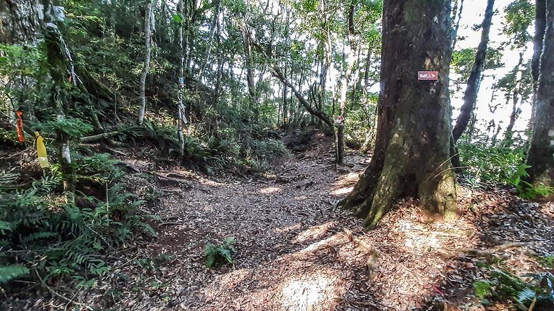 哈堪尼山4號救援樁鹿湖山岔路 (2)