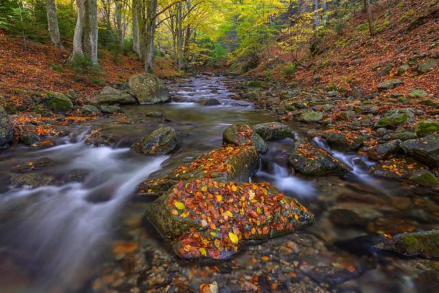 Into the autumn embrace (Explored)