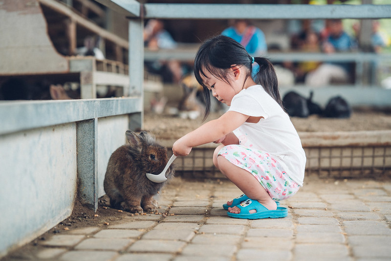 兔兔妹|Sigma 85mm Art 020
