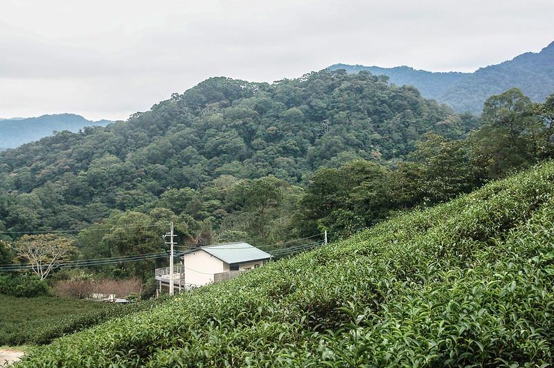 猿山果園東望猿山