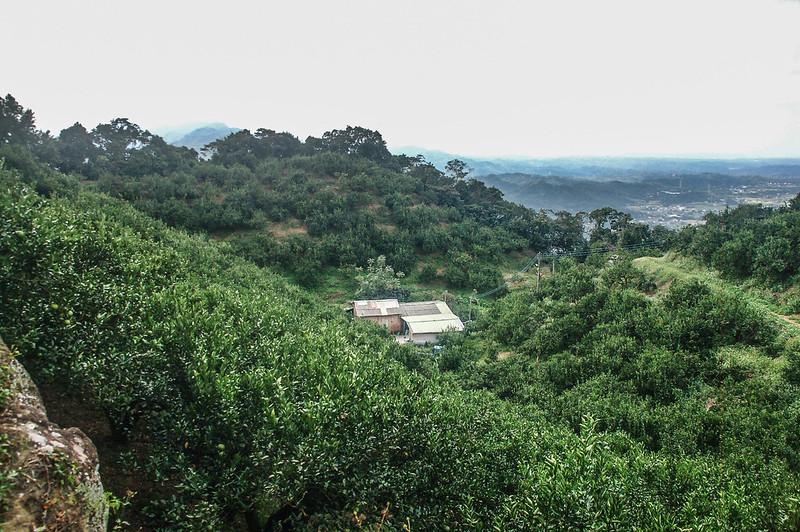 猿山、獅頭山山徑果園 (4)