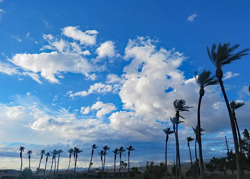 windy trees sky clouds palm california white blue nature photography desert palmdesert weather blowing clear air sunny high up looking flckr landscape bend skinny atmosphere