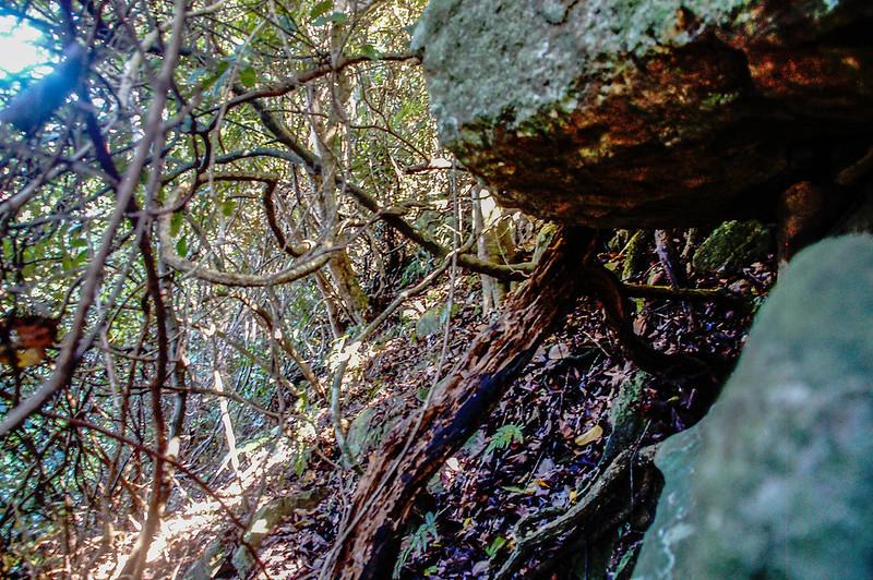 蕃婆石山危險岩稜取左腰繞 (1)