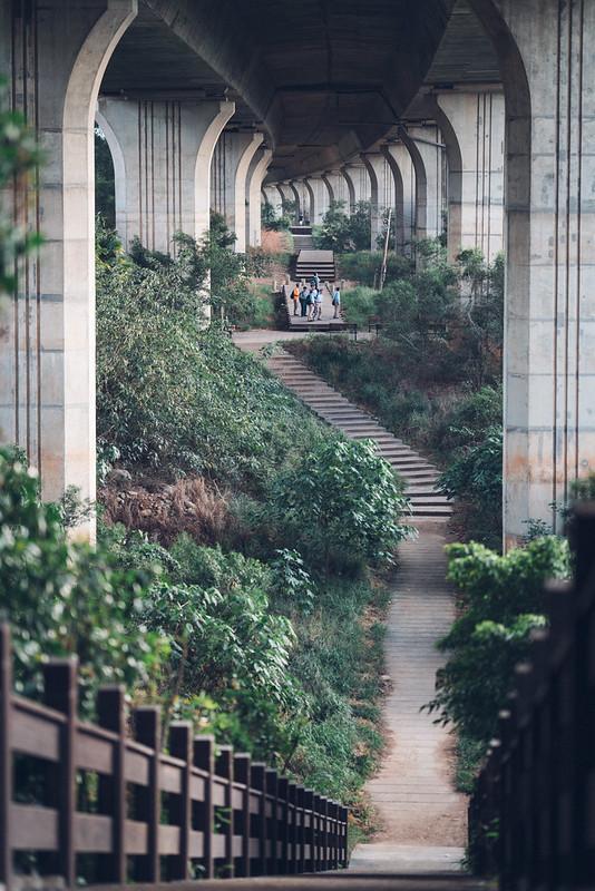 台中市|Sigma 85mm Art 020