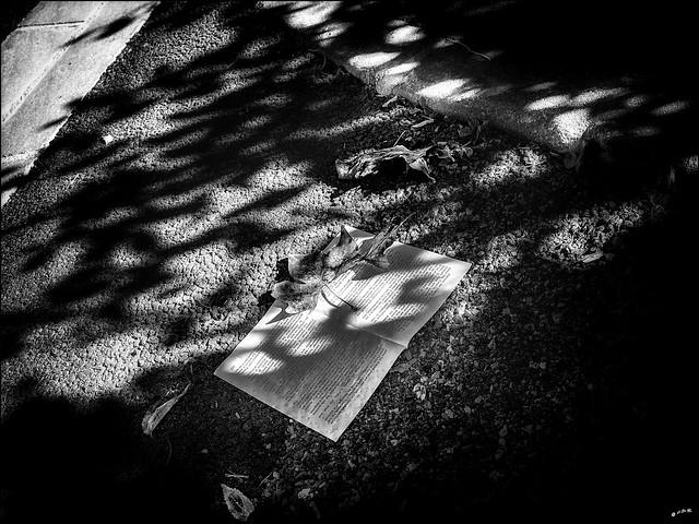 La chute automnale des feuilles... / Autumn falling leaves (and sheets)...