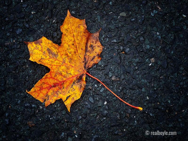 Autumn-2020