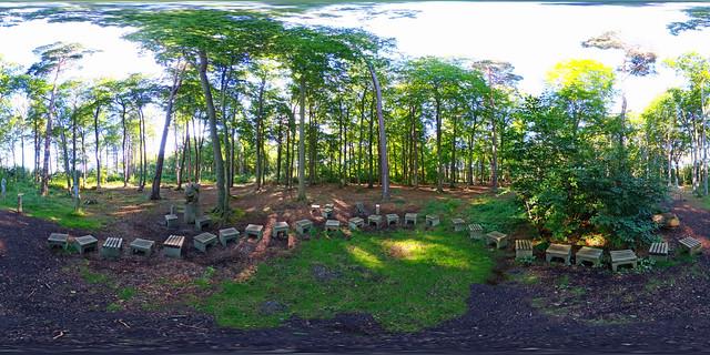 Graal-Müritz - Hockerkreis im Wald 360 Grad