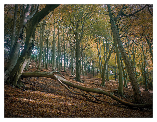 Autum in the Limb Valley