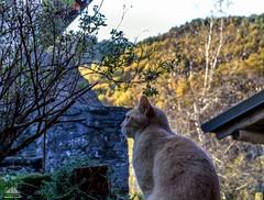 We Love Autumn ♡