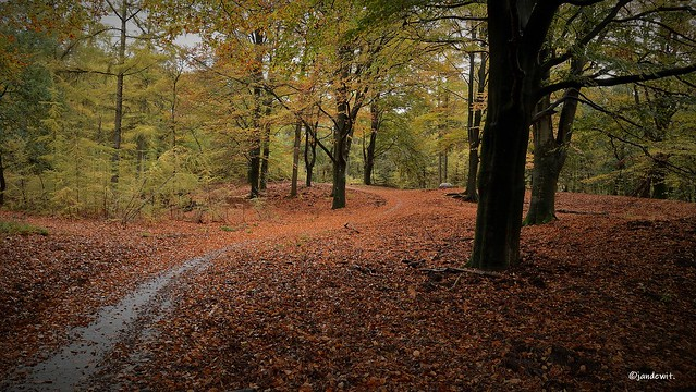 Kreelseweg in herfstkleuren.