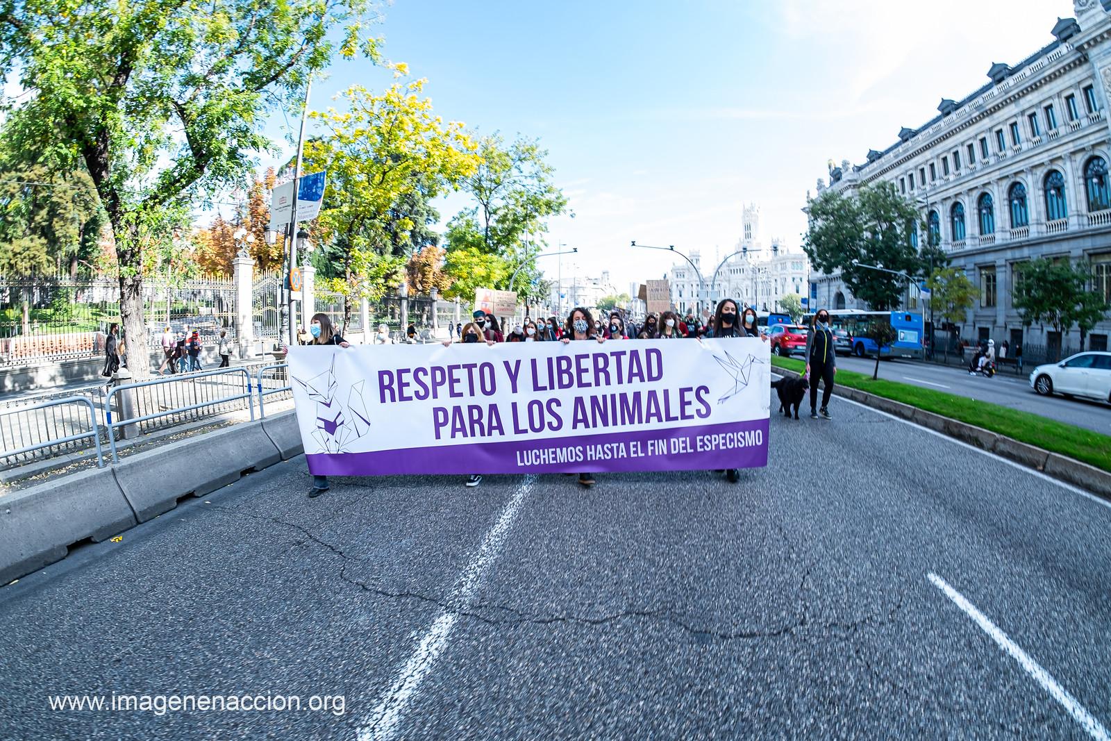 Imagen en Acción Manifestación Antiespecista