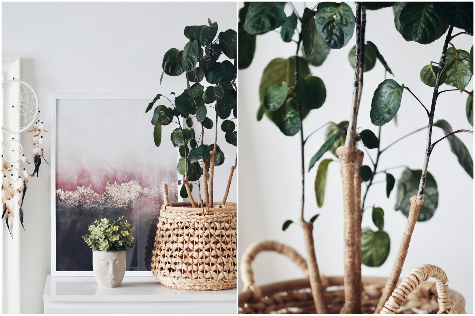 viherkasvit-kasvatus-blogi