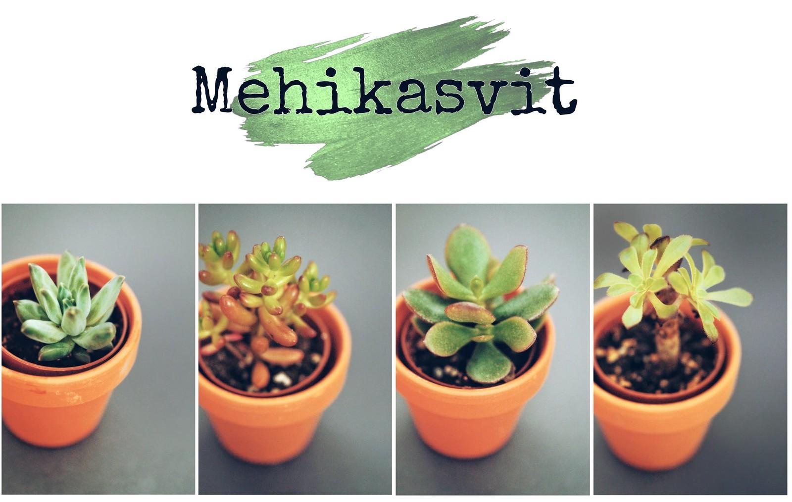 mehikasvit-viherkasvit-blogi
