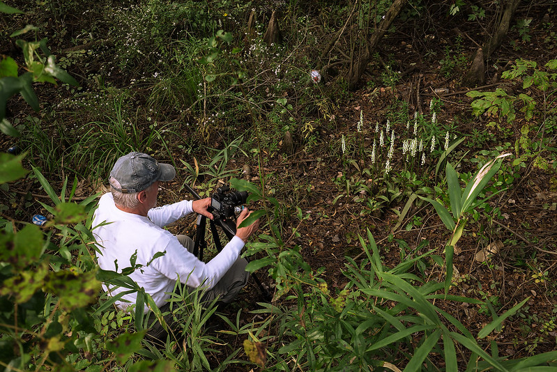 Yours truly photographing a nice clump of Fragrant Ladies'-tresses orchids