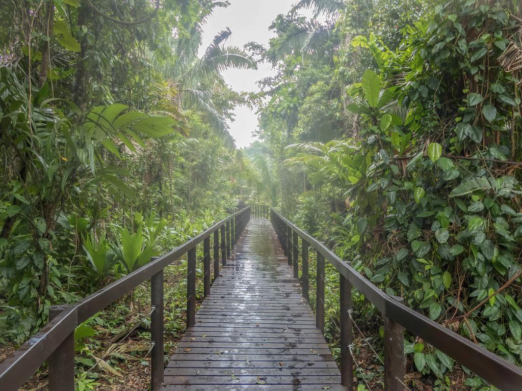 Dans les brumes de la jungle de Cahuita... 50563558411_2b69269b4e_b