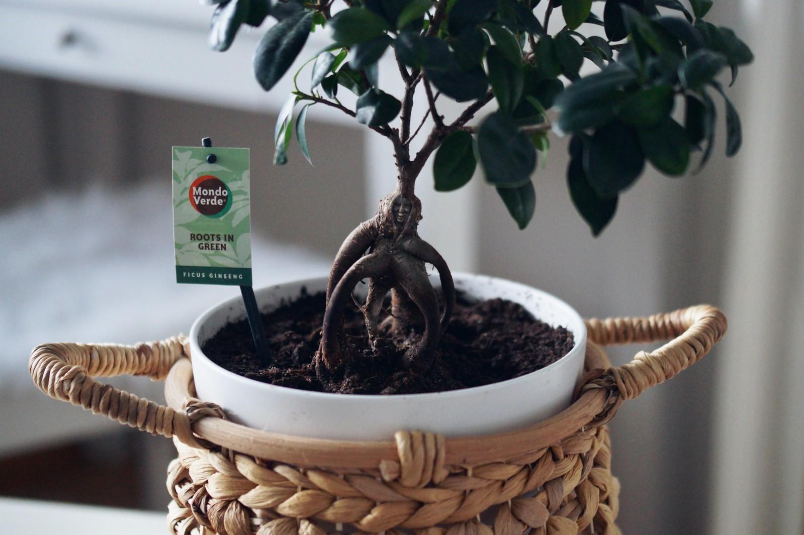 kasvien-kasvatus-viherkasvit-blogi