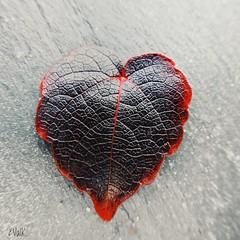 Car notre coeur rouge est noir... . .