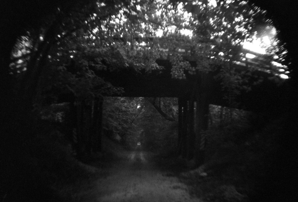 Dark Bridge and Tree Tunnel