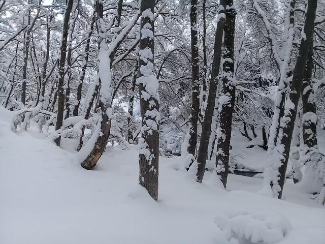 Forest in Montes Martiales, Tierra del Fuego, Argentina
