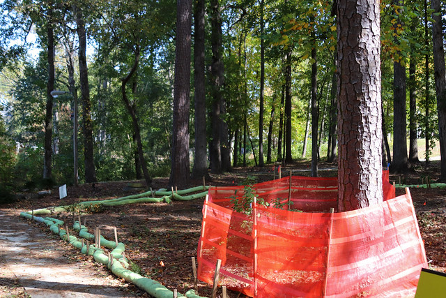Woodland Walk Construction Update