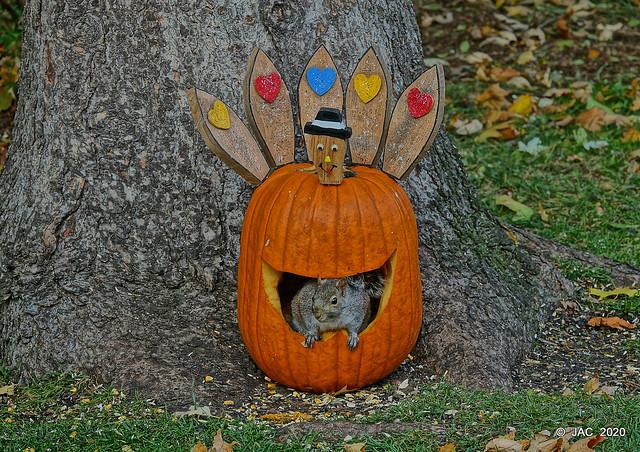 Gobble Gobble said the Squirrel