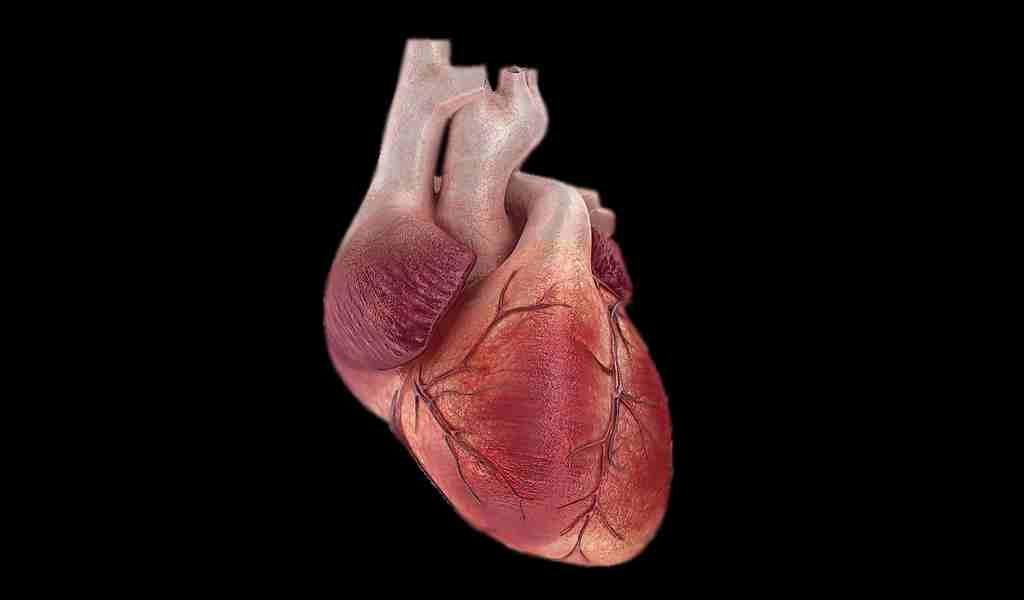 un-dispositif-implantable-peut-surveiller-le-cœur