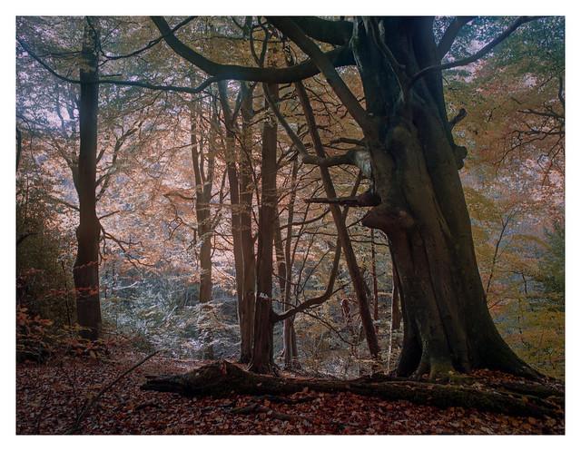 Autumn arboreal