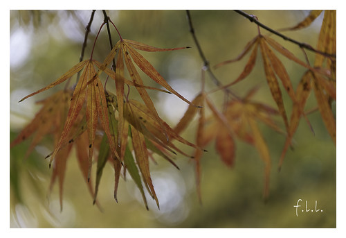 Variations d'automne | by FLL087