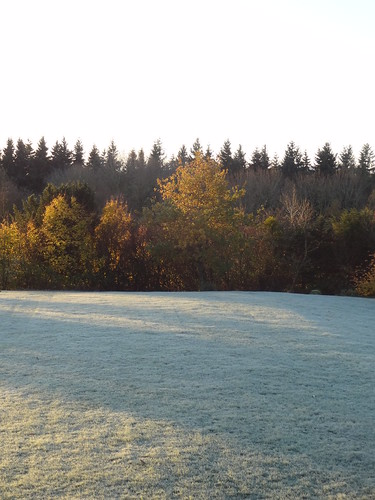 First frost | by Mary Loosemore