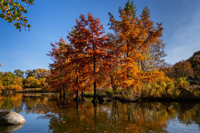 Buntes Herbstlaub (Explored)